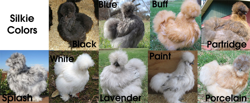 5ef52a73_silkies_colors